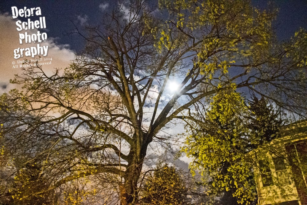 Moon & Trees 1_edited-2