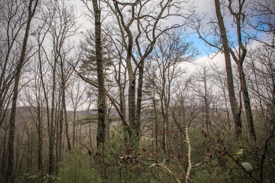Caledonia State Park 12.24.17 3