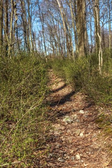 Gravity Trail 13