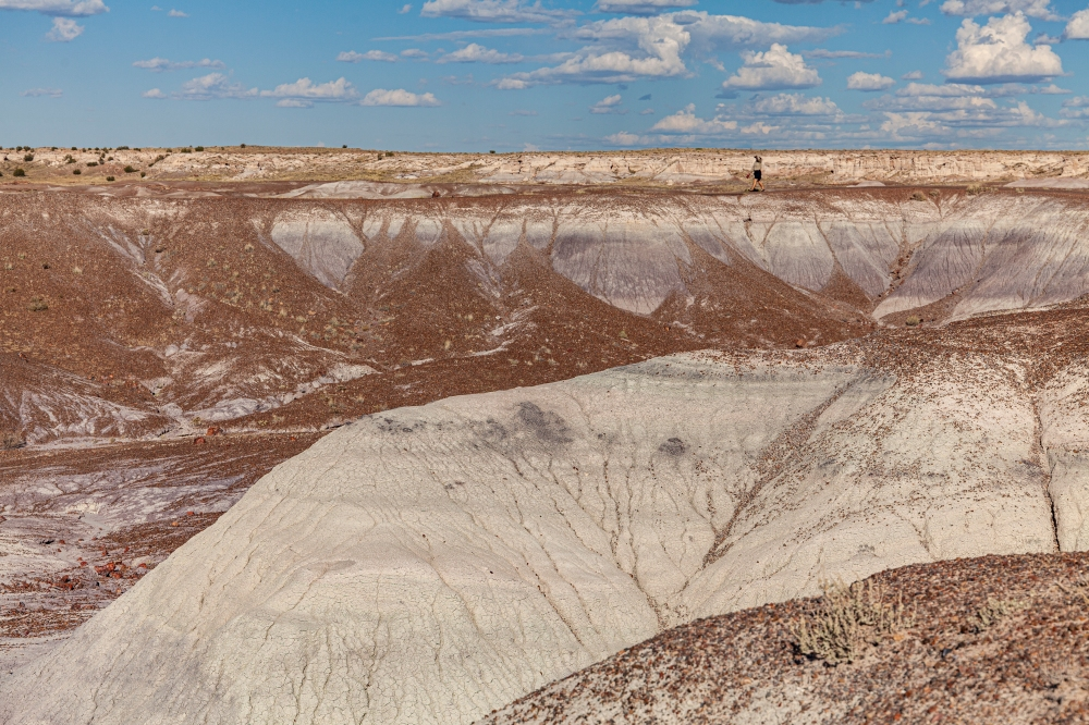 Petrified Forest National Park 21.jpg